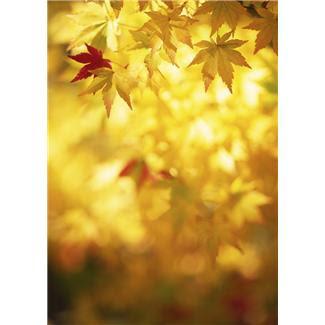 sun+in+autumn+leaves.JPG