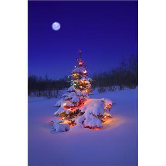 christmas+tree+in+snow.JPG