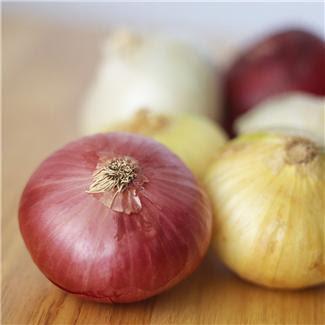 onions+2.JPG