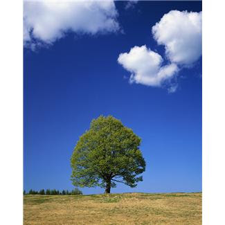 tree+cloud.JPG