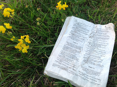 Bible+in+grass.jpg